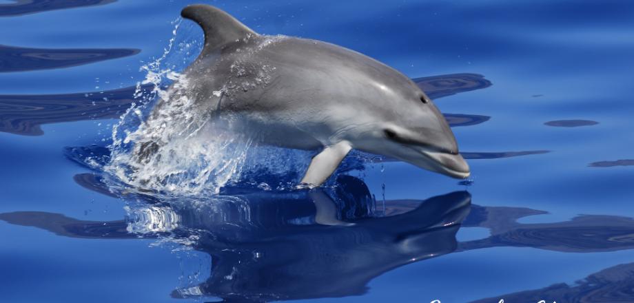 Excursiones delfines Tenerife