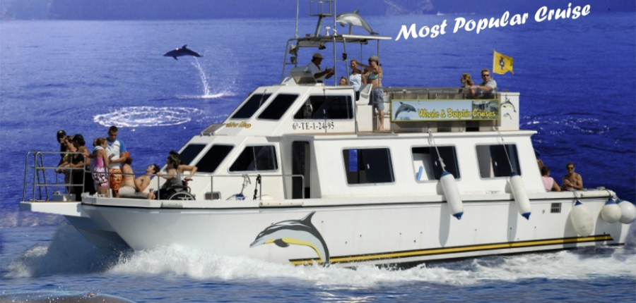 Whale watching in Tenerife South